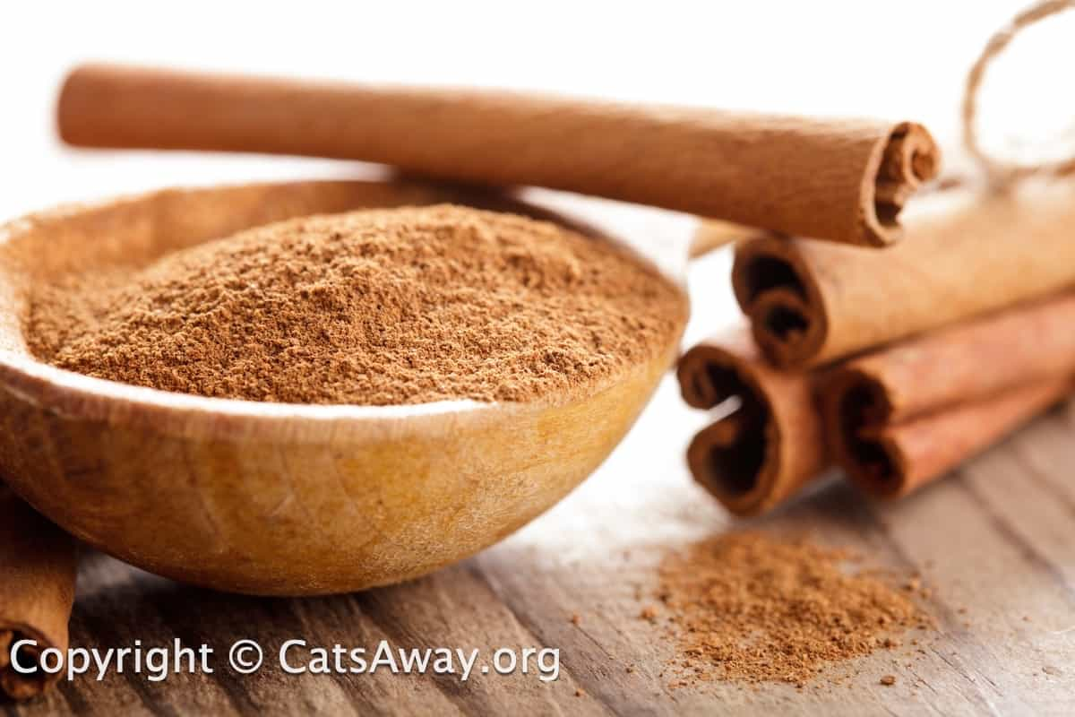 is cinnamon safe for cats?